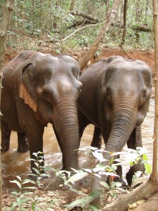 Elephants at Elephant Valley Project