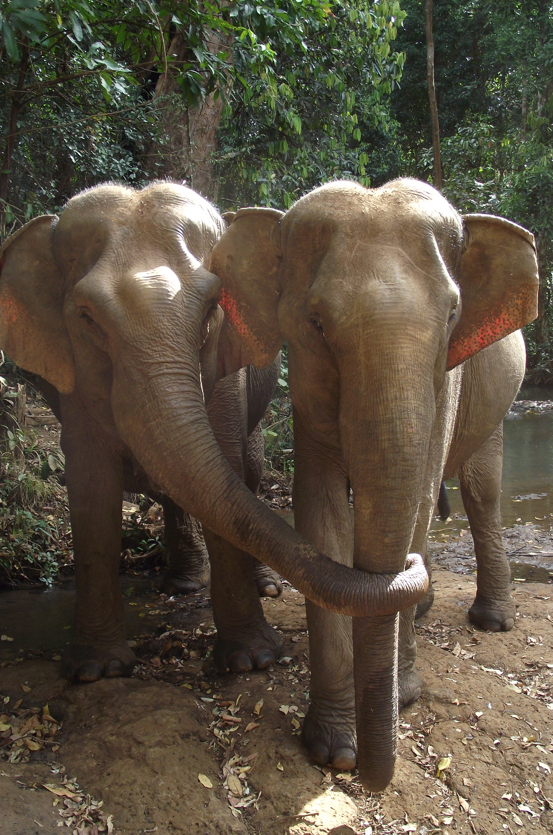 Elephant Valley Project needs your help!