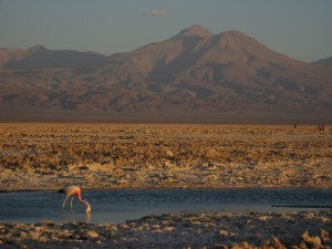 Chaxa Lagoon, Chile (courtesy of Travolution.org)