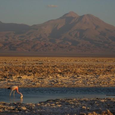 Chaxa Lagoon, Chile (courtesy of Travolution.org)