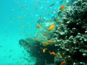 Marine life in Tanzania