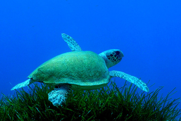 New Greek sea turtle project launched