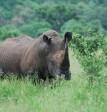 Rhino (c) James Bailey