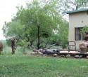 Accommodation on safari (c) James Bailey