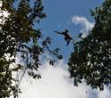 Primates in Costa Rica