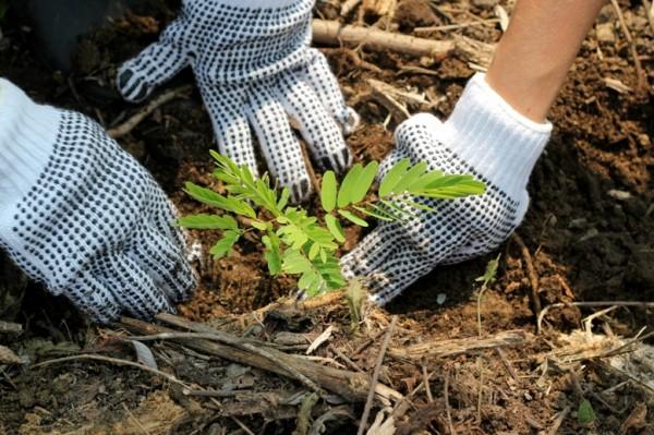 image courtesy of Peru Amazon Rainforest Conservation