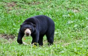 Bear_Pheemai