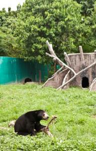 Bear_Pinda