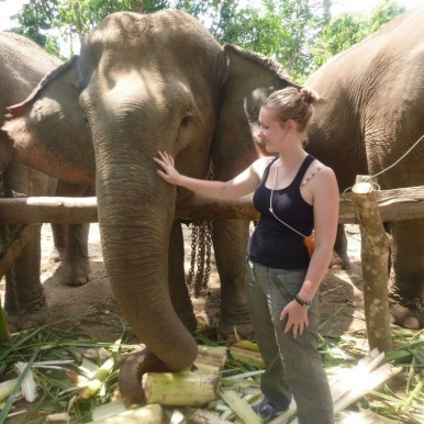 working with elephants in Thailand