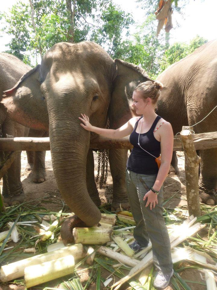 Help preserve Thailand's elephant population