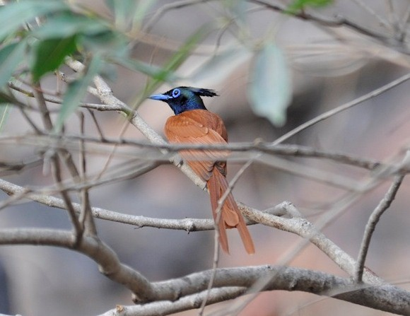 India's birdlife (photo by Toby Sinclair)