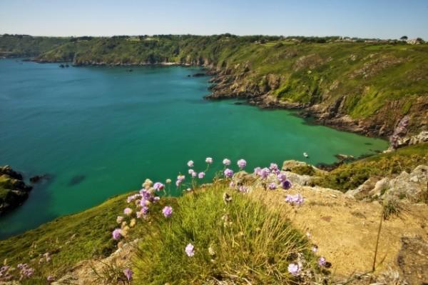 Herm, puffin cliffs