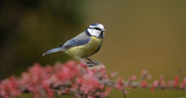 Wake-up to birdsong with BBC Radio 3