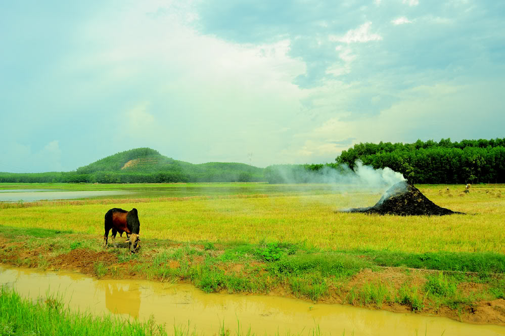 Homestay & Rural life experience Tours