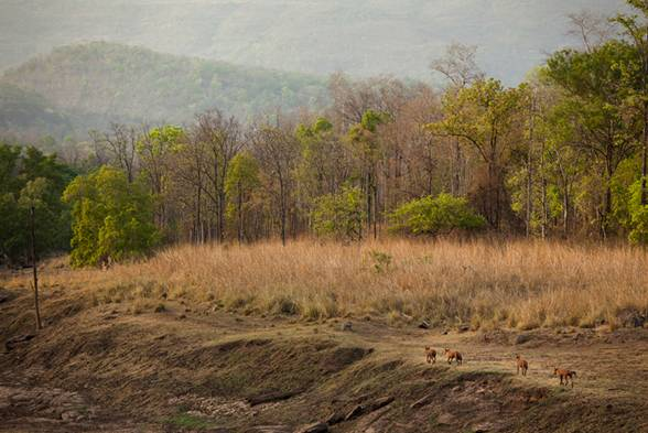 Satpura National Park, India