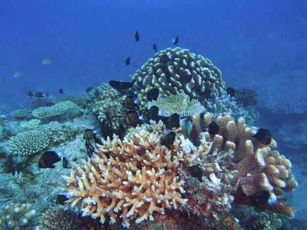marine life in Fiji, Frontier