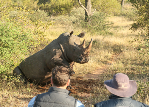 Go behind the scenes helping rhino on a South African safari
