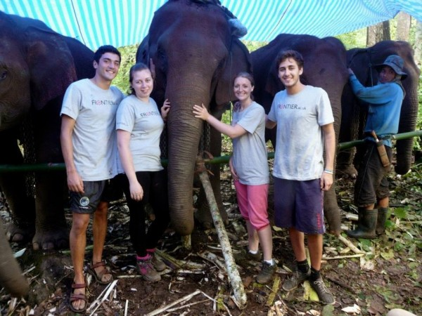 working on Frontier Thailand elephant project
