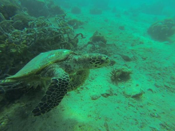 diving in Madagascar