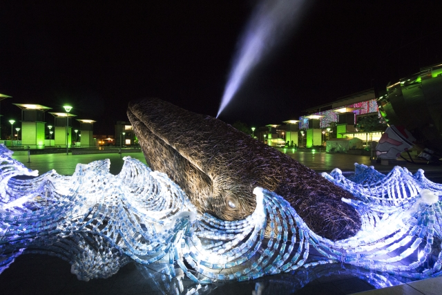 Life size whale art makes a splash in Bristol