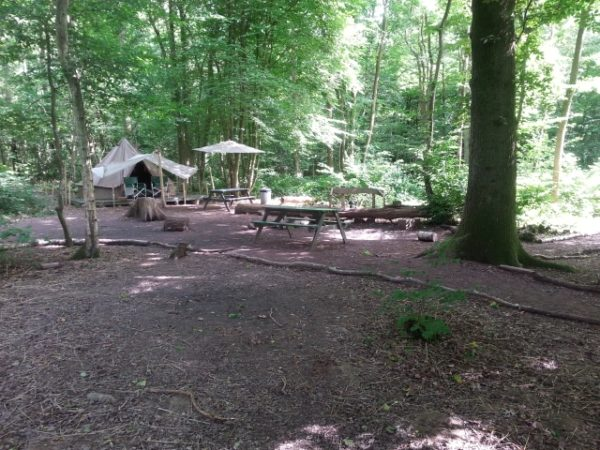 Your own private clearing at Wild Boar Wood campsite